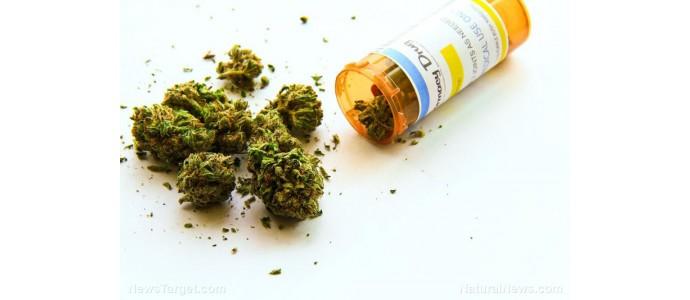 Le cannabis s'est révélé être un traitement efficace pour les maux de tête et les migraines, disent les chercheurs